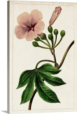 Mauve Botanicals I
