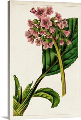 Mauve Botanicals II