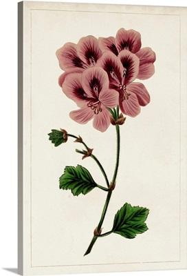 Mauve Botanicals III