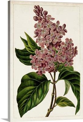 Mauve Botanicals IV