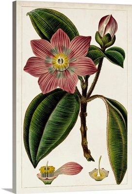 Mauve Botanicals VI
