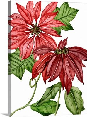 Merry Blossom III
