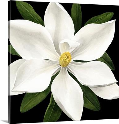 Midnight Magnolia I
