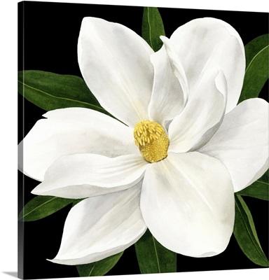 Midnight Magnolia II