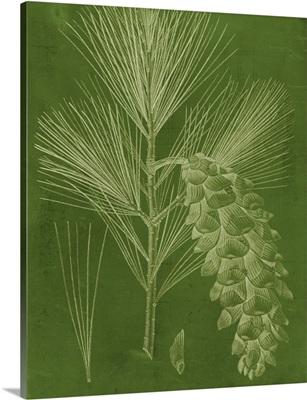 Modern Pine VI