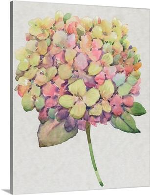 Multicolor Floral II