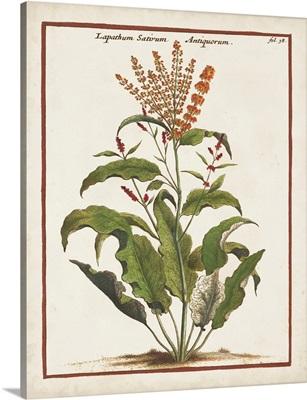 Munting Botanicals I