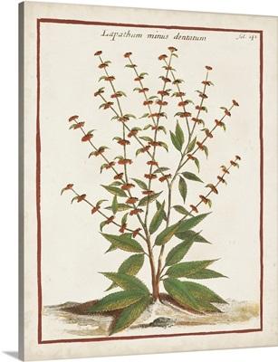 Munting Botanicals III