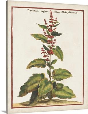 Munting Botanicals IV