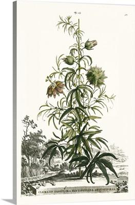 Munting Garden Varieties I