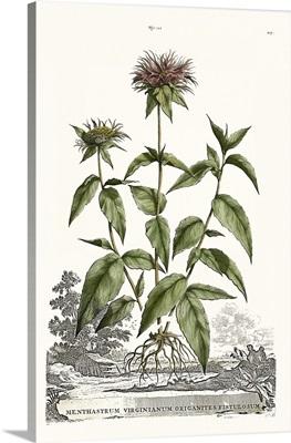 Munting Garden Varieties IV