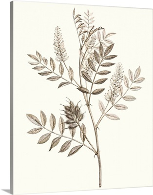 Neutral Botanical Study III