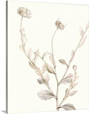 Neutral Botanical Study IV