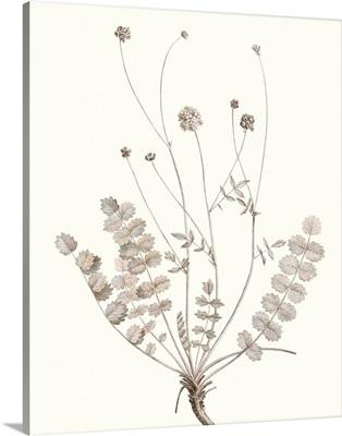 Neutral Botanical Study IX