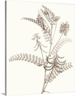 Neutral Botanical Study VII