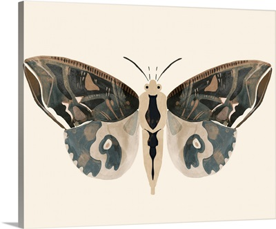 Neutral Moth II