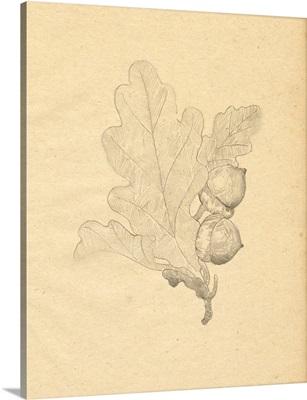 Oak Leaf Sketch I