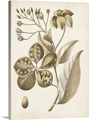 Ochre Botanical II