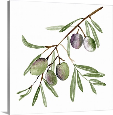 Olive Branch I