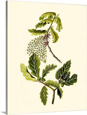Olive Greenery III