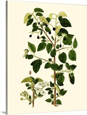 Olive Greenery V