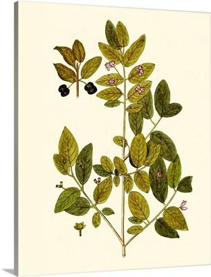 Olive Greenery VII