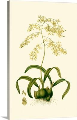 Orchid Array III