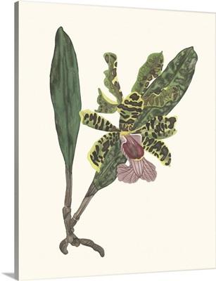 Orchid Display II