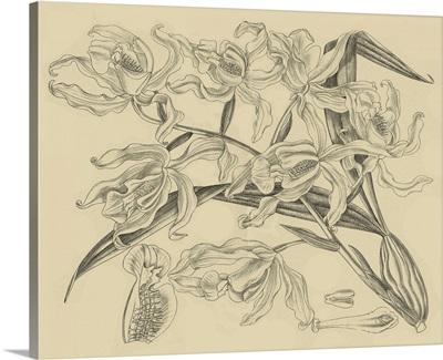 Orchid on Khaki II