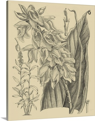 Orchid on Khaki III