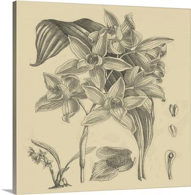 Orchid on Khaki IV