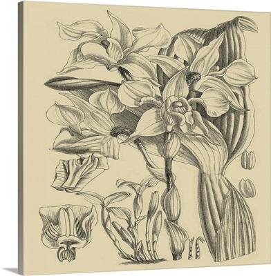 Orchid on Khaki V