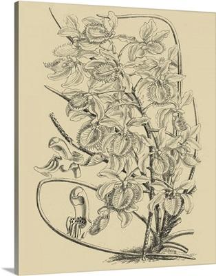 Orchid on Khaki VI