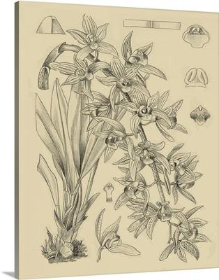 Orchid on Khaki VII