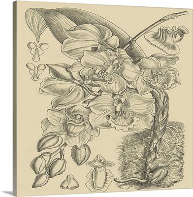 Orchid on Khaki VIII