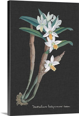 Orchid on Slate I