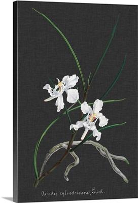 Orchid on Slate II