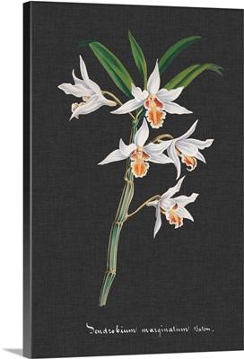 Orchid on Slate IV