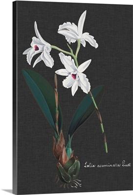 Orchid on Slate V
