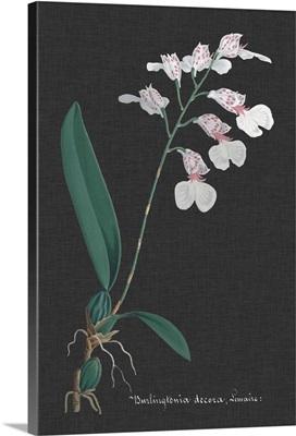 Orchid on Slate VI