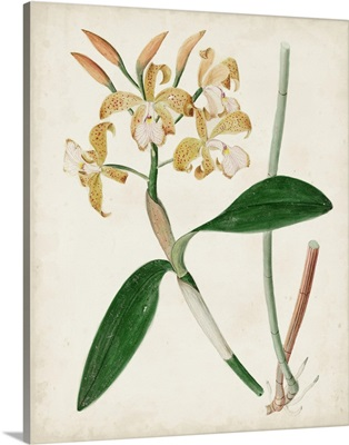 Orchid Pair II