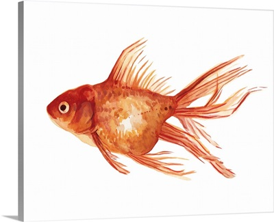 Ornamental Goldfish I