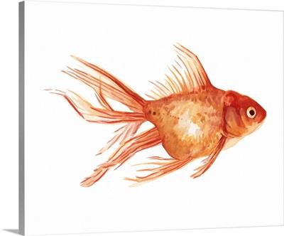Ornamental Goldfish II