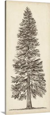 Pacific Northwest Tree Sketch I