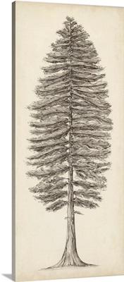 Pacific Northwest Tree Sketch II