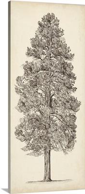 Pacific Northwest Tree Sketch III