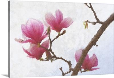Painted Magnolias I