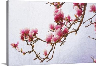 Painted Magnolias II