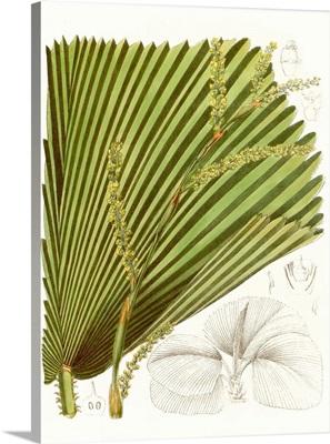 Palm Melange I