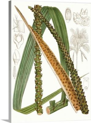 Palm Melange IX